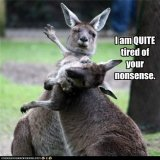 funny-animal-captions-animal-capshunz-i-said-gday.jpg